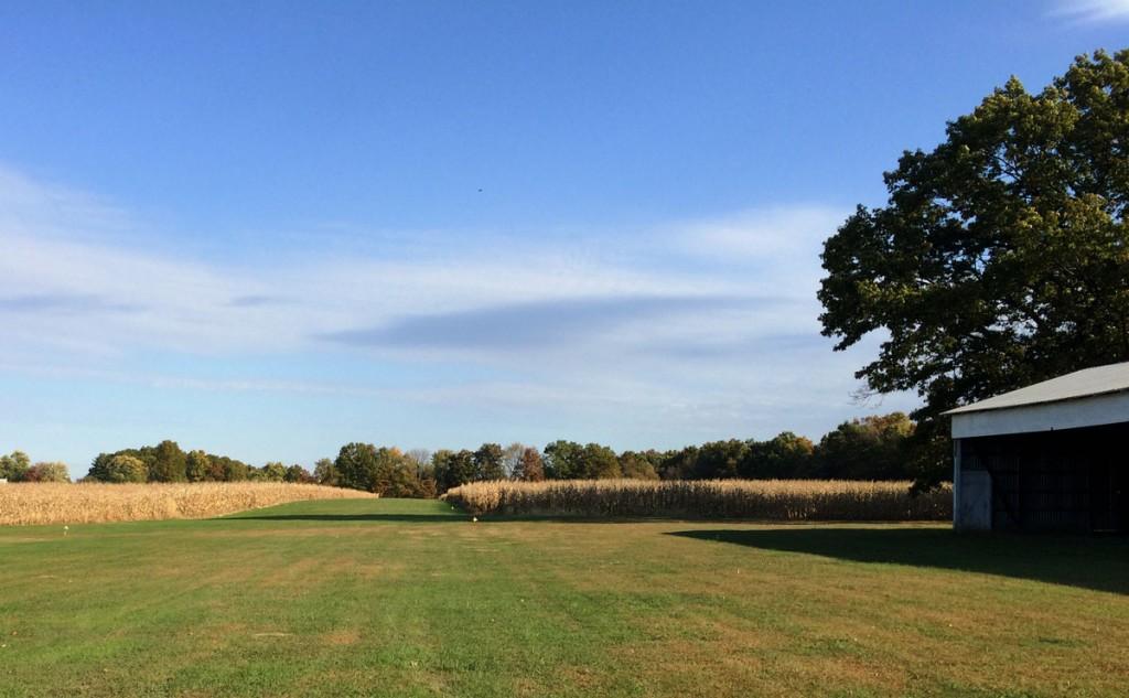 grass airstrip amidst corn field