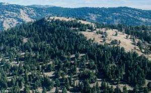 pine trees on Rocky Mountain peak